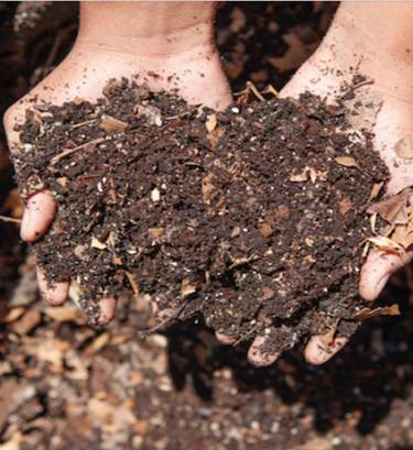 compost soil image